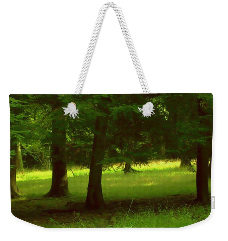 Nature Weekender Tote Bag featuring the photograph Enchanted Forest by Linda Sannuti