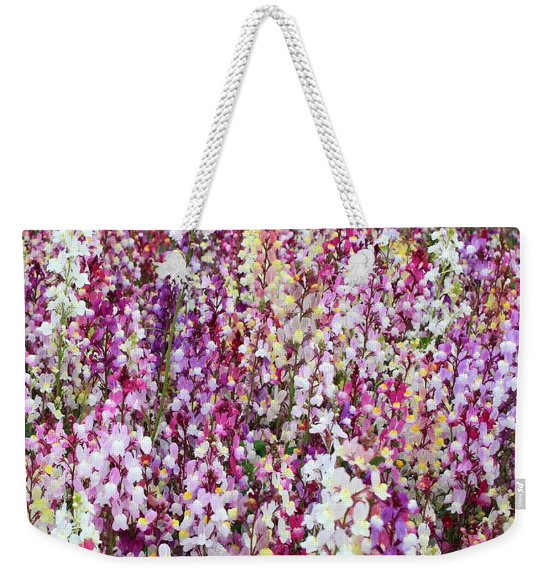 Colorful Flowers Weekender Tote Bag featuring the photograph Endless Field Of Flowers by Carol Groenen