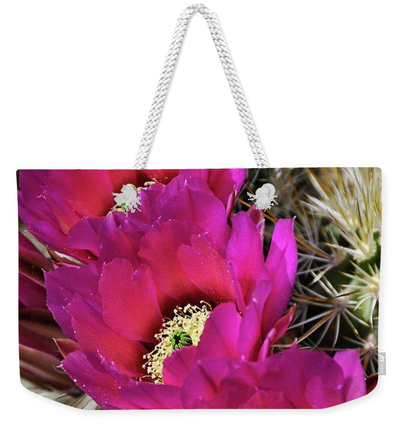 Arizona Weekender Tote Bag featuring the photograph Engleman's Hedgehog Cactus by Saija Lehtonen