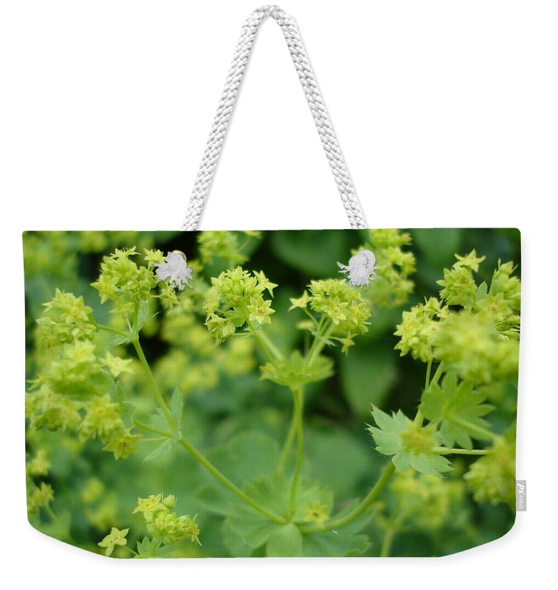 Plant Weekender Tote Bag featuring the photograph English Ladys Mantle by Susan Baker