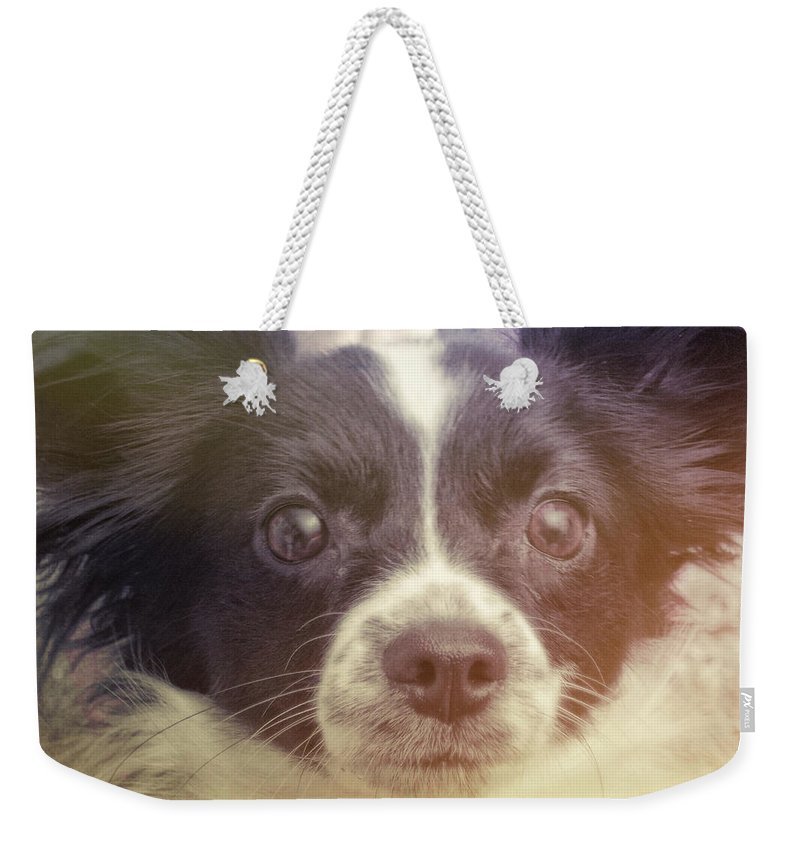 Dog Weekender Tote Bag featuring the photograph Ennis by JAMART Photography