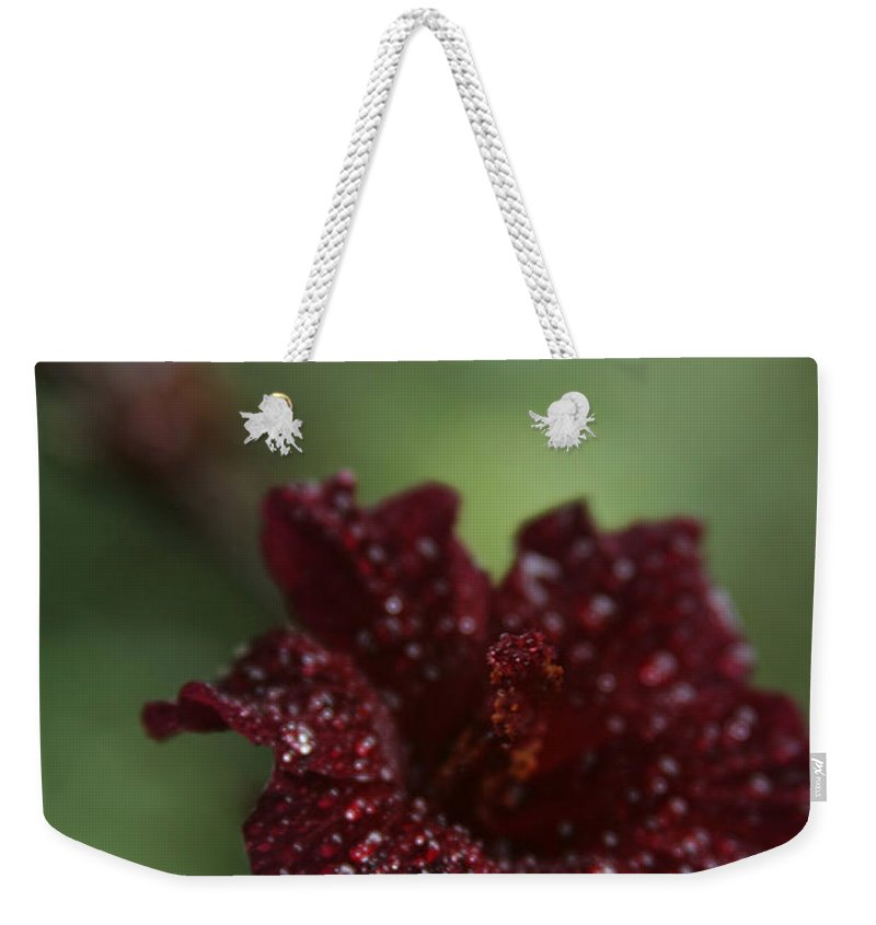 Aloha Weekender Tote Bag featuring the photograph Eternal Harmony by Sharon Mau