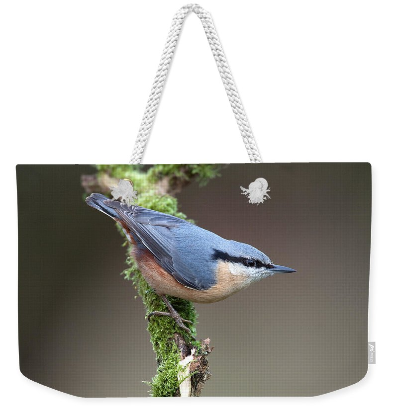 Nuthatch Weekender Tote Bag featuring the photograph European Nuthatch by Bob Kemp