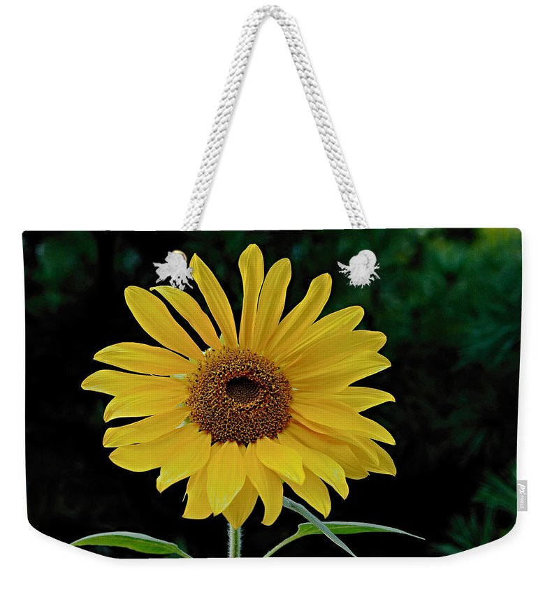 Nature Weekender Tote Bag featuring the photograph Evening Sunflower by William Jobes