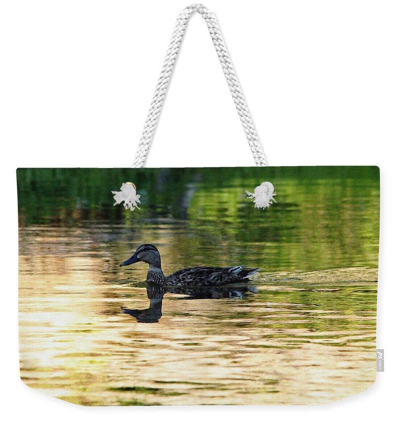 Duck Weekender Tote Bag featuring the photograph Evening Swim by Debbie Oppermann