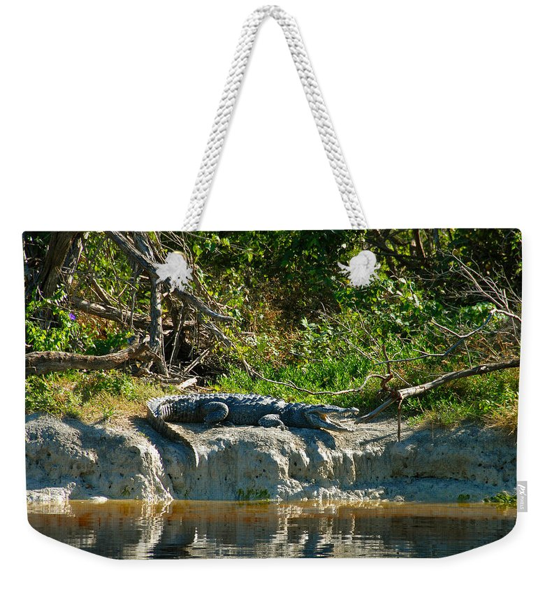 Everglades National Park Weekender Tote Bag featuring the photograph Everglades Crocodile by David Lee Thompson