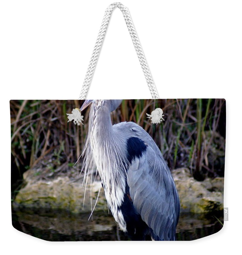 Everglades Weekender Tote Bag featuring the photograph Everglades Heron by Marty Koch