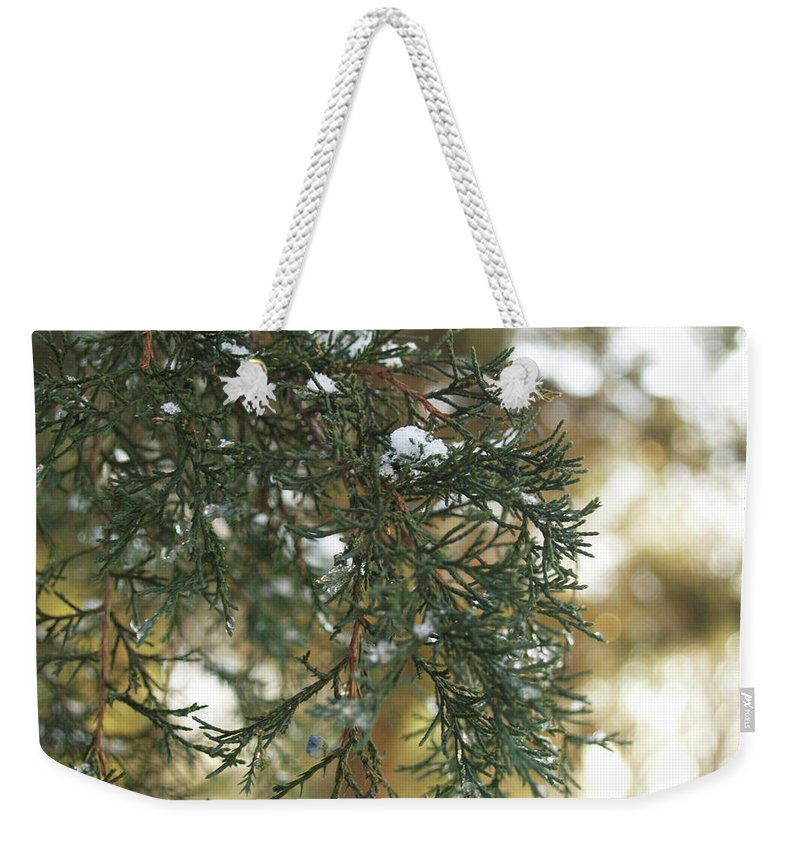 Evergreen Weekender Tote Bag featuring the photograph Evergreen by Andrea Lynch