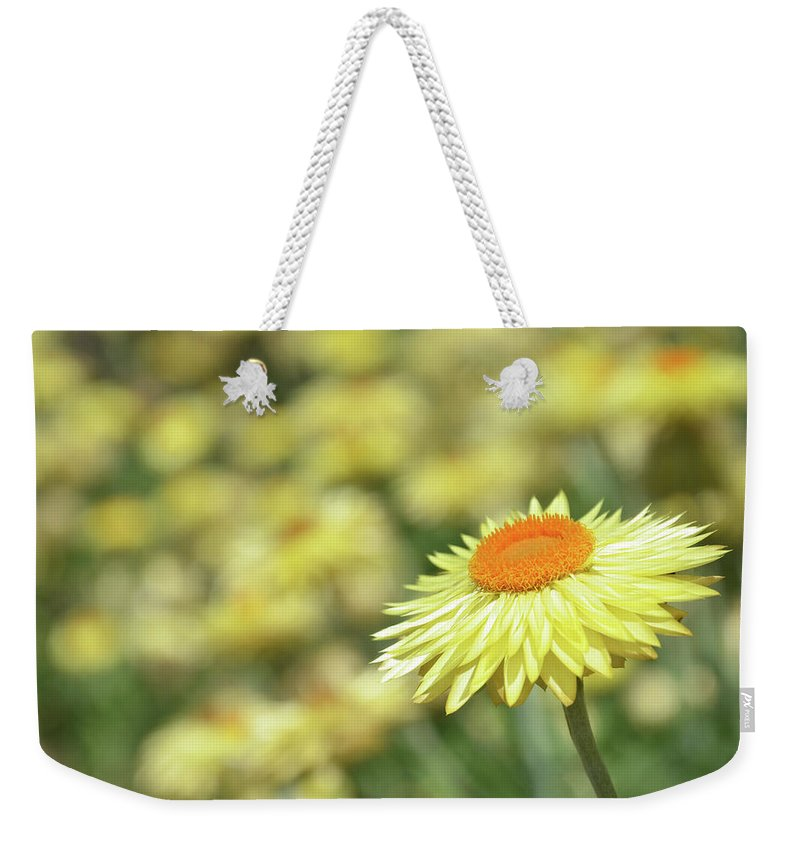 Flower Weekender Tote Bag featuring the photograph Everlasting Daisy by Karen Black