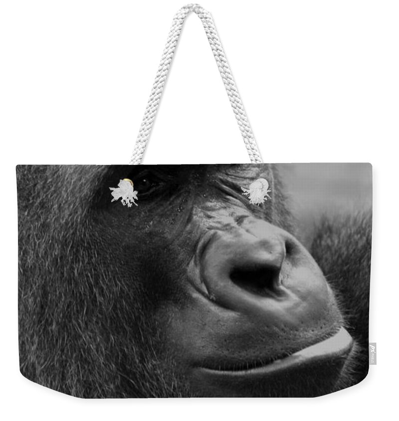 Africa Weekender Tote Bag featuring the photograph Everyones Friend by Alan Look