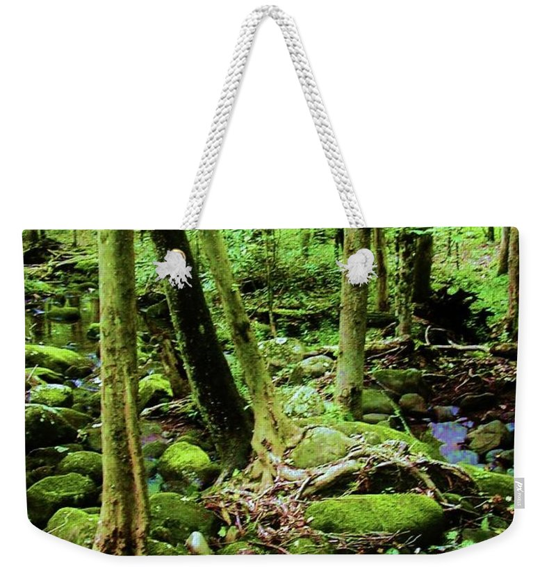 River Weekender Tote Bag featuring the photograph Evolution Of A Forest In Spring by Diana Dearen