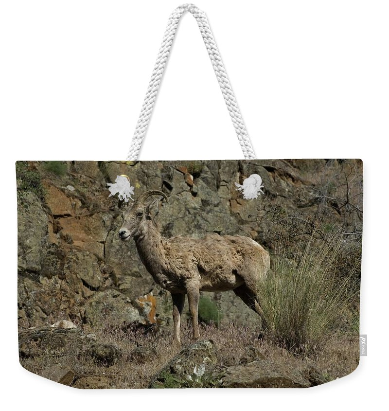 Sheep Weekender Tote Bag featuring the photograph Ewe 2 by Sara Stevenson