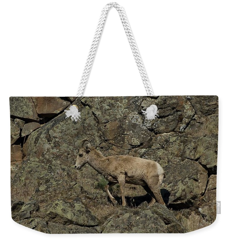 Goat Weekender Tote Bag featuring the photograph Ewe 4 by Sara Stevenson
