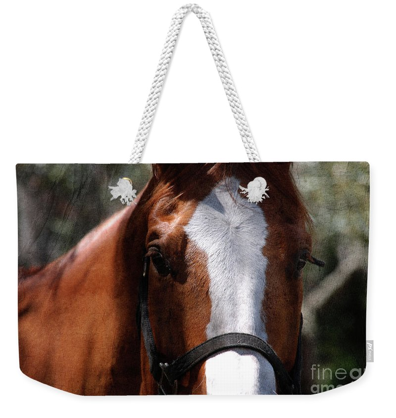 Horse Weekender Tote Bag featuring the photograph Eye Contact by Susanne Van Hulst