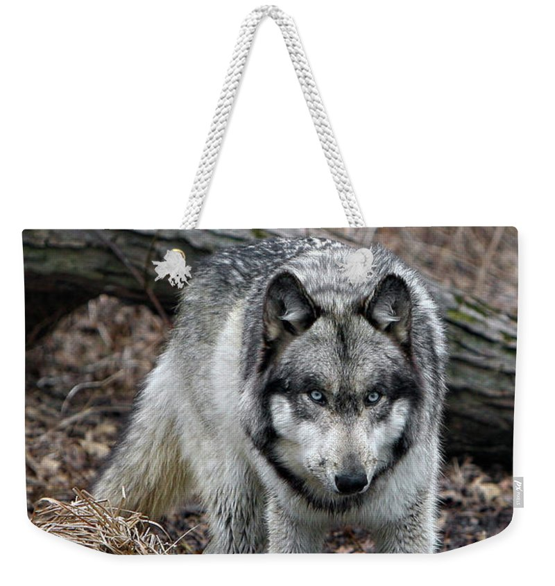 Wolf Weekender Tote Bag featuring the photograph Eye On You by Shari Jardina