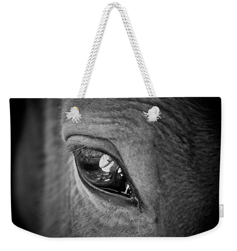 Eye Weekender Tote Bag featuring the photograph Eye See You by Hannah Breidenbach