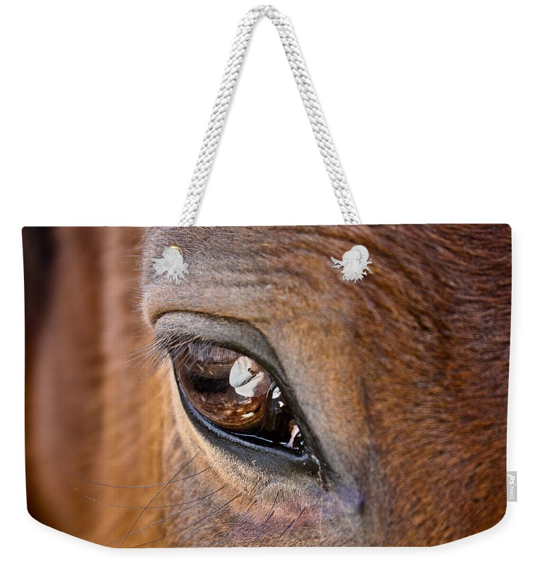 Horse Weekender Tote Bag featuring the photograph Eye See You Too by Hannah Breidenbach