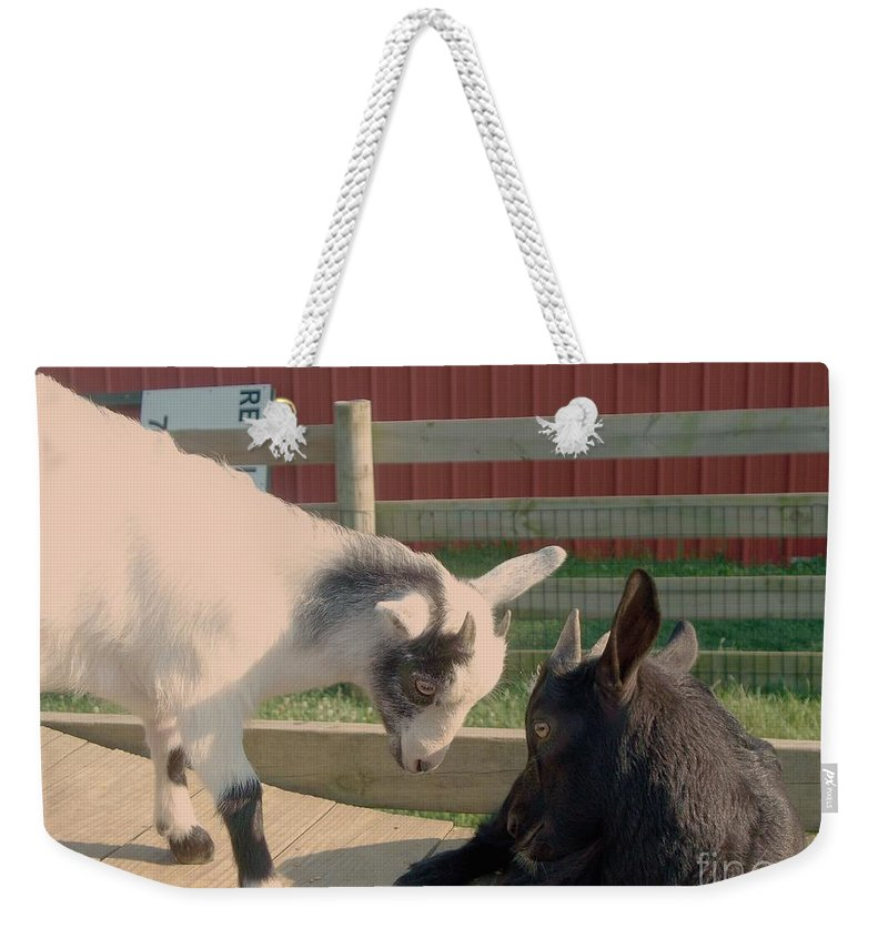 Goats Weekender Tote Bag featuring the painting Eye To Eye by Eric Schiabor