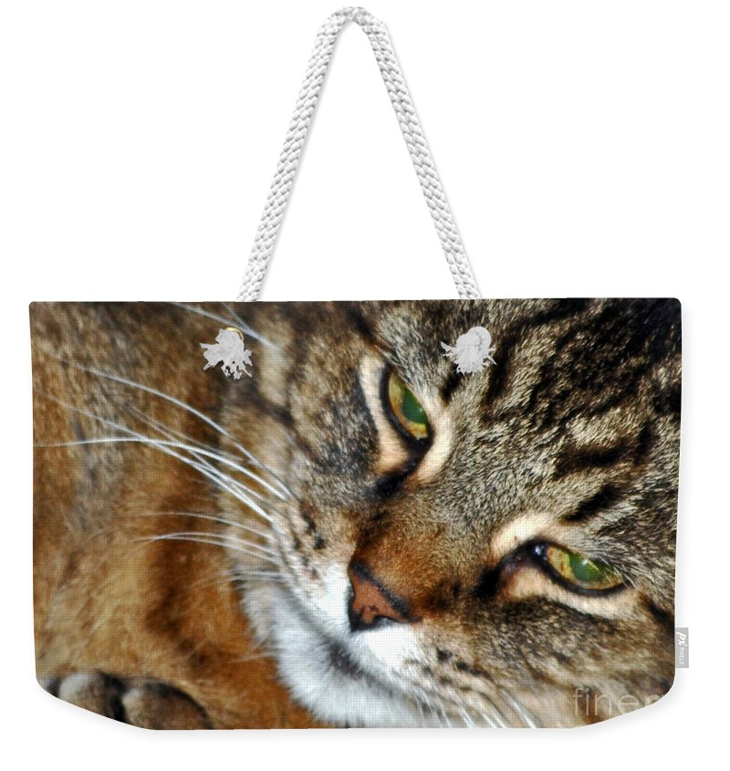 Cats Weekender Tote Bag featuring the photograph Eyes Of Love by Lydia Holly