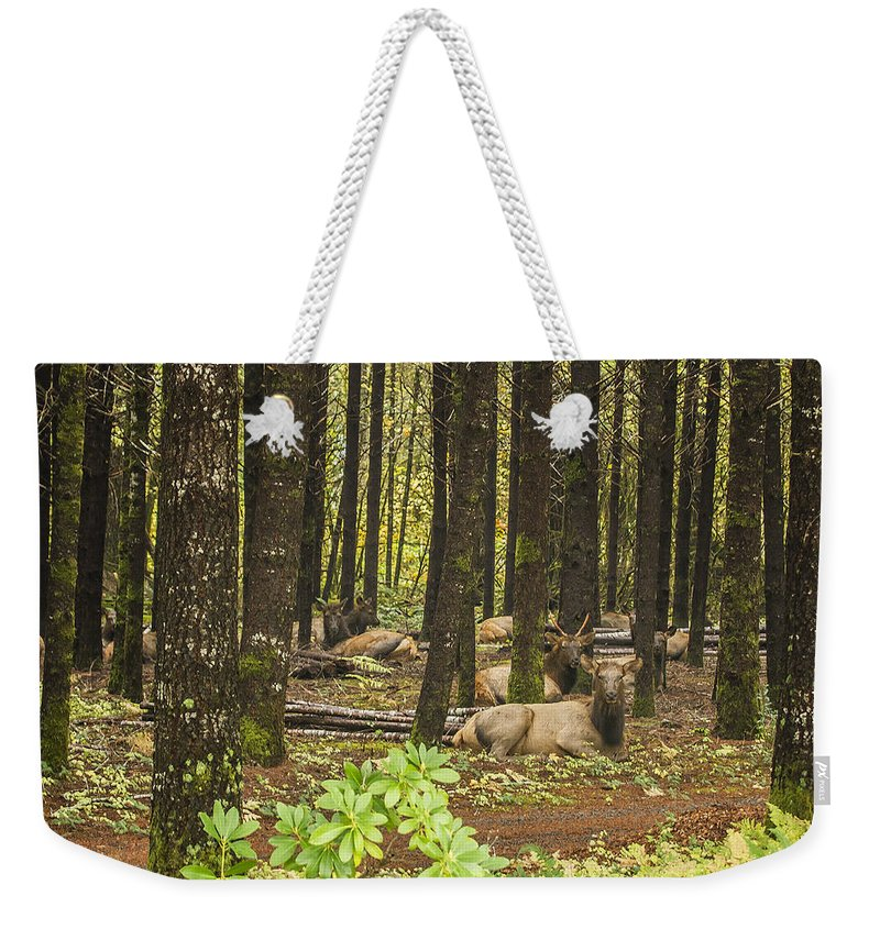 Elk Weekender Tote Bag featuring the photograph Faces In The Woods by Belinda Greb