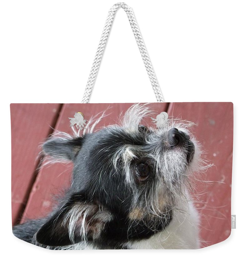 Kauai Animals Weekender Tote Bag featuring the photograph Faith by Mary Deal