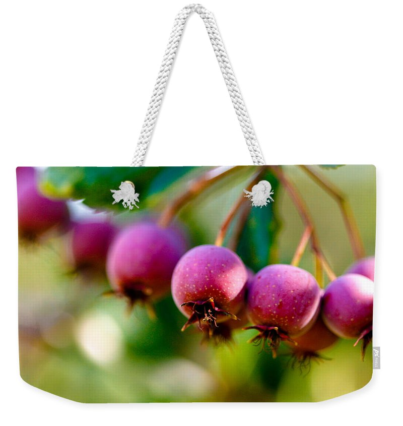 Berry Weekender Tote Bag featuring the photograph Fall Berries by Marilyn Hunt