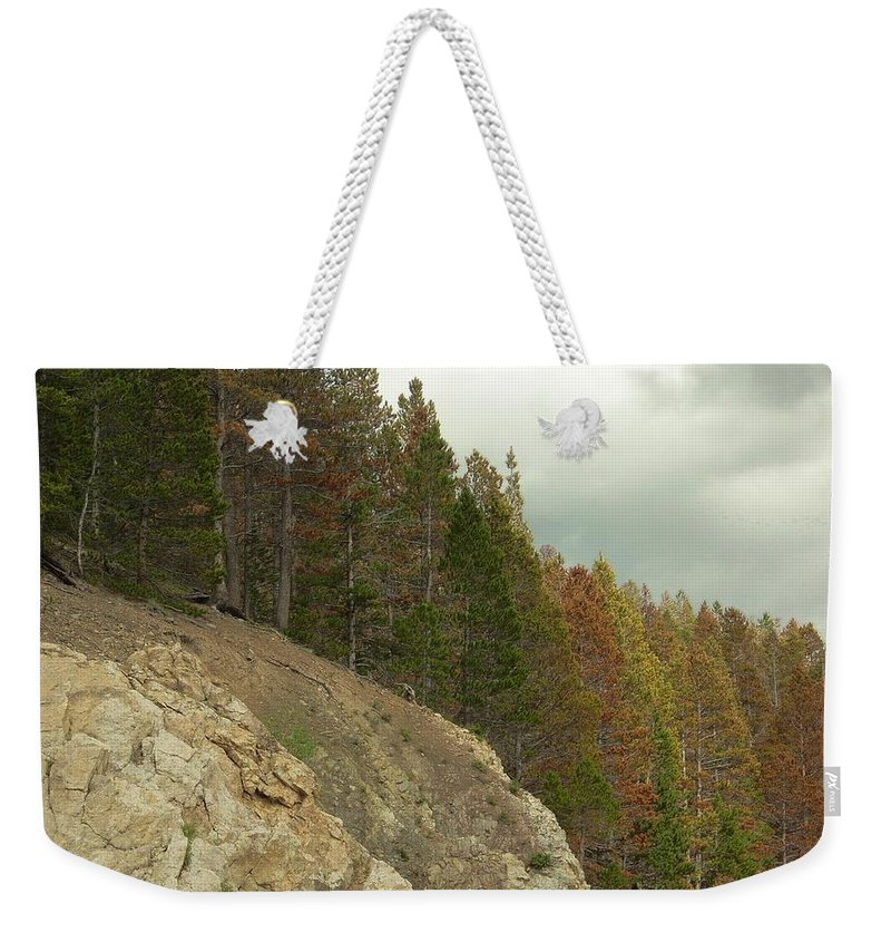 Trees Weekender Tote Bag featuring the photograph Fall Color Evergreens by Sara Stevenson