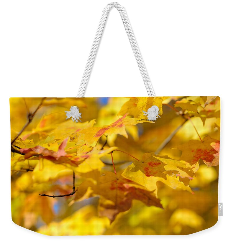 Nature Weekender Tote Bag featuring the photograph Fall Colors by Sebastian Musial