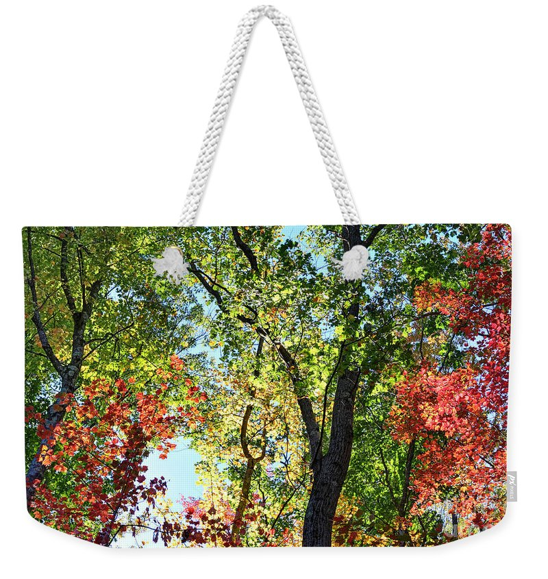 Forest Weekender Tote Bag featuring the photograph Fall Foliage by Dia Karanouh
