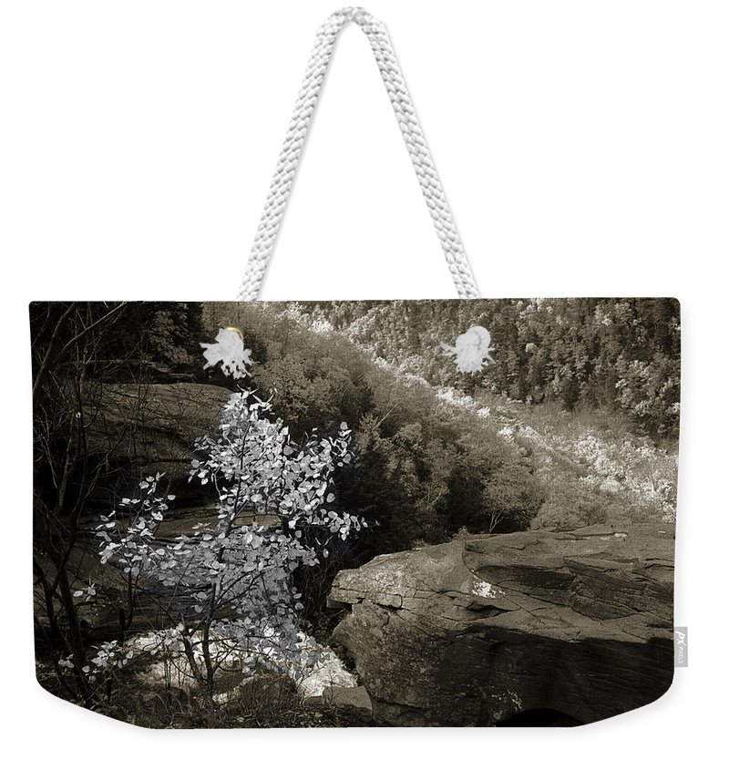 Nature Weekender Tote Bag featuring the photograph Fall Foliage by Yuri Lev