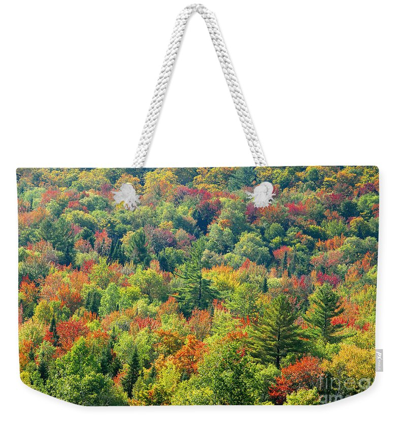 Adirondack Mountains Weekender Tote Bag featuring the photograph Fall Forest by David Lee Thompson