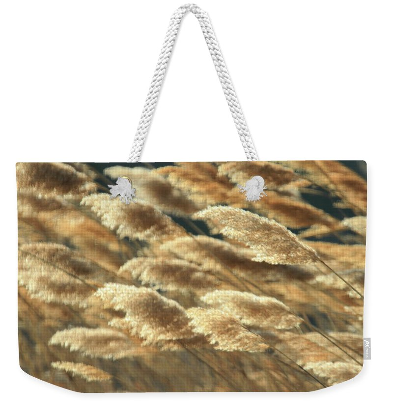 Recent Weekender Tote Bag featuring the photograph Fall Grass by Geraldine Scull