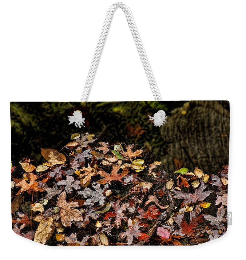 Maple Leaves Weekender Tote Bag featuring the photograph Fall In August by Kelley King