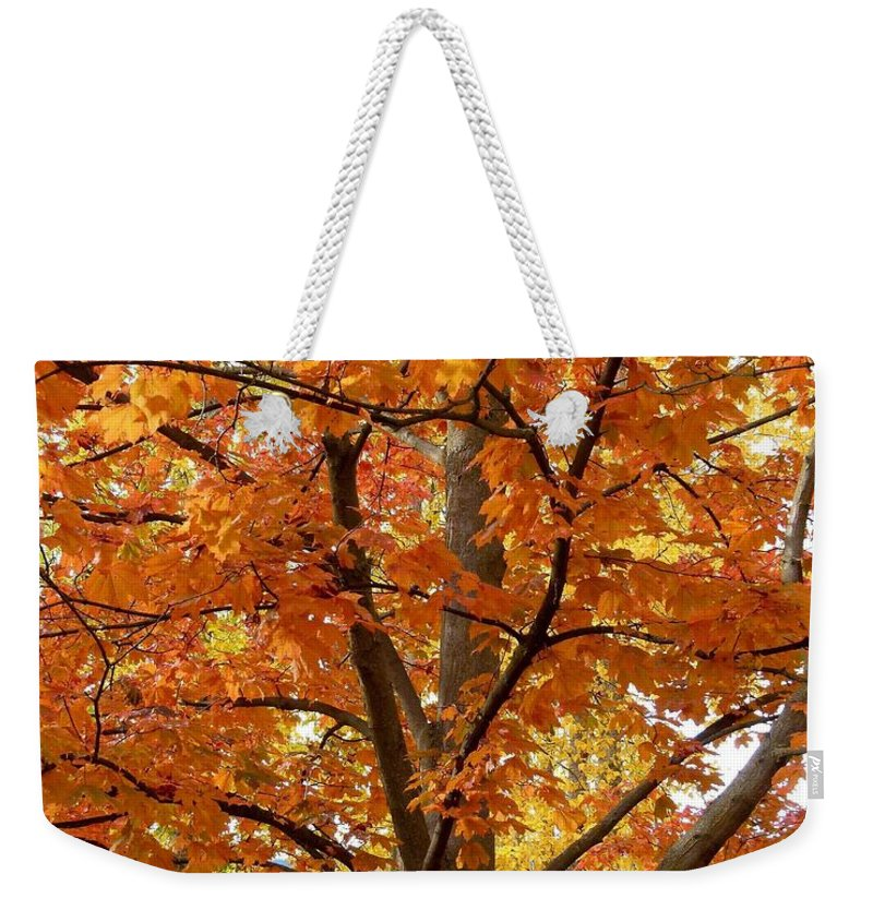 Kaloya Park Weekender Tote Bag featuring the photograph Fall In Kayloya Park 2 by Will Borden