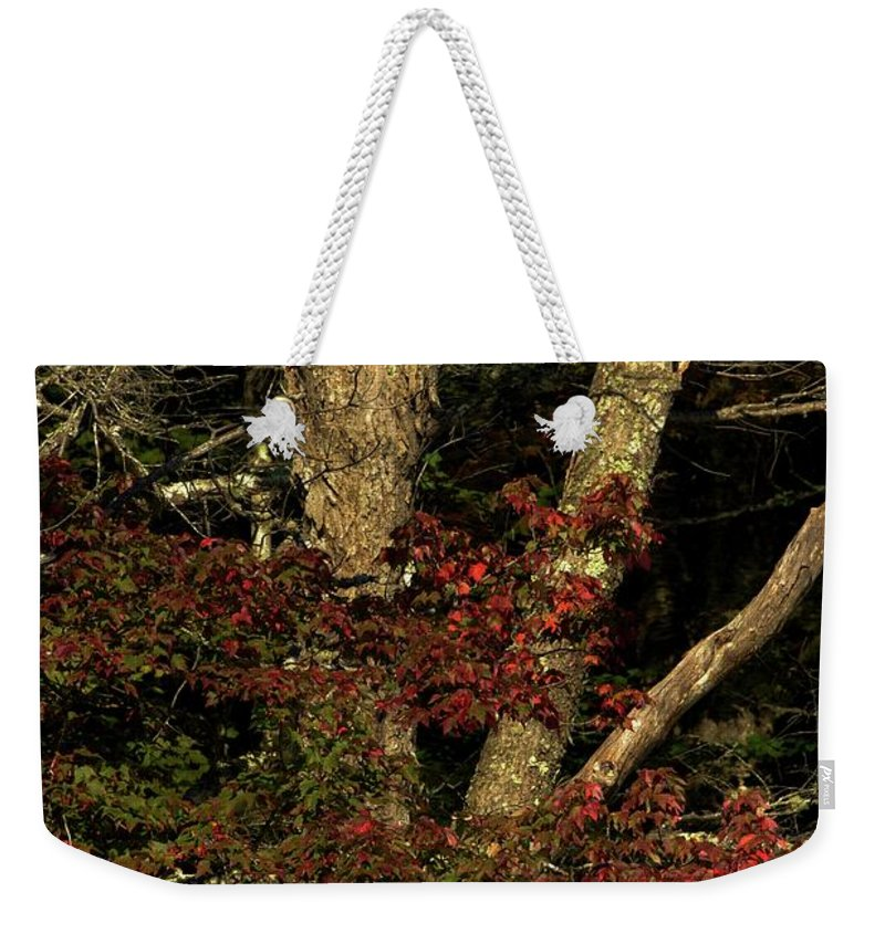 Maple Weekender Tote Bag featuring the photograph Fall Is Closing In by Sherman Perry