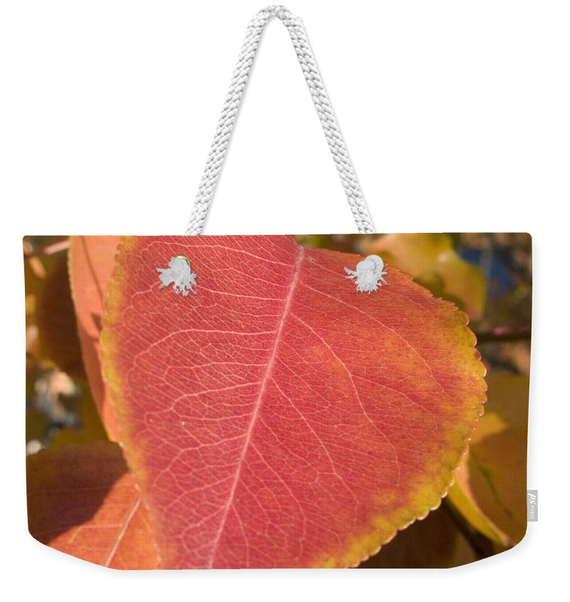 Landscape Weekender Tote Bag featuring the photograph Fall by Jeffery Ball