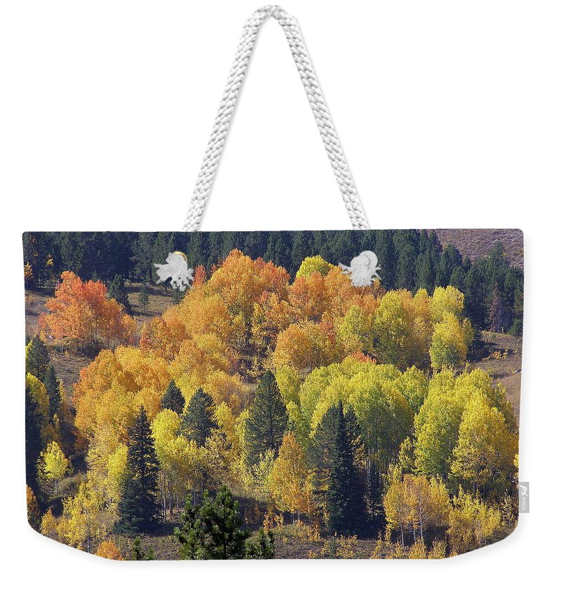 Trees Weekender Tote Bag featuring the photograph Fall Lands In Western Wyoming by DeeLon Merritt