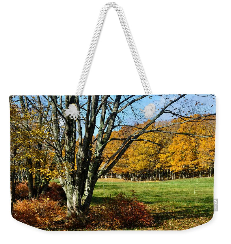 Trees Weekender Tote Bag featuring the photograph Fall Pasture by Tim Nyberg