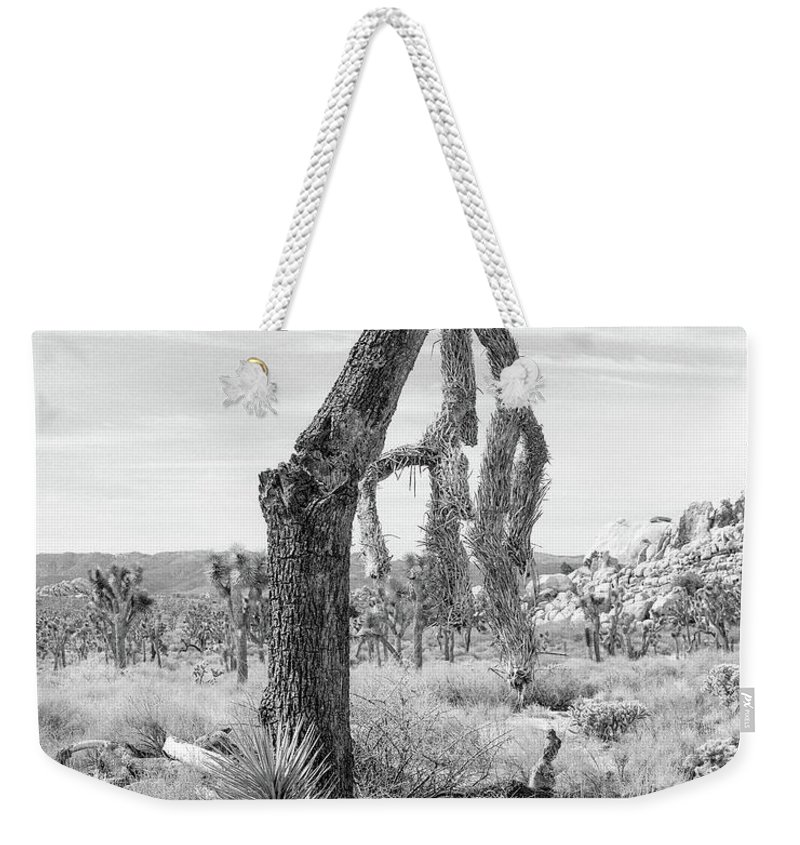 Joshua Tree Weekender Tote Bag featuring the photograph Falling Joshua Tree Branch by Alex Snay