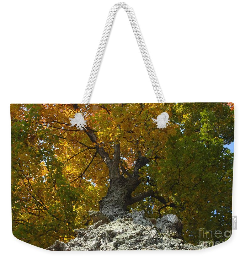 Fall Weekender Tote Bag featuring the photograph Falling Tree by David Lee Thompson