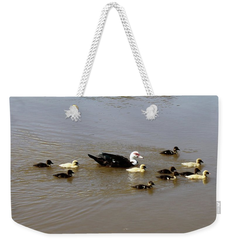 Brad Brailsford Weekender Tote Bag featuring the photograph Family Swim by Brad Brailsford