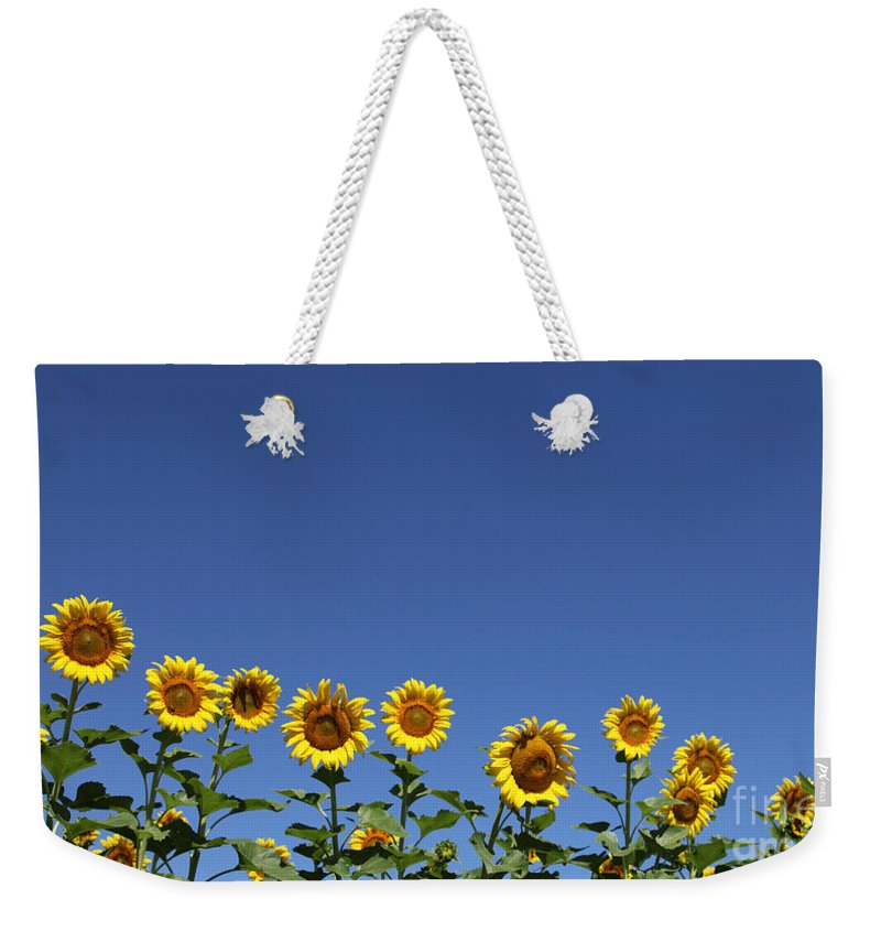 Sunflowers Weekender Tote Bag featuring the photograph Family Time by Amanda Barcon