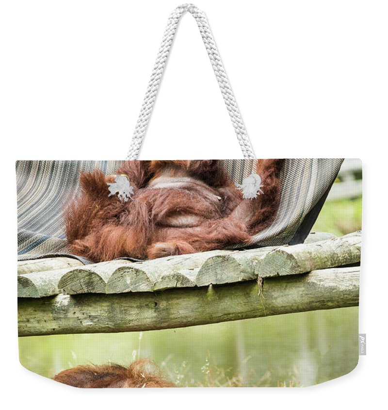 Orangutang Weekender Tote Bag featuring the photograph Family Time by Ed Tepper