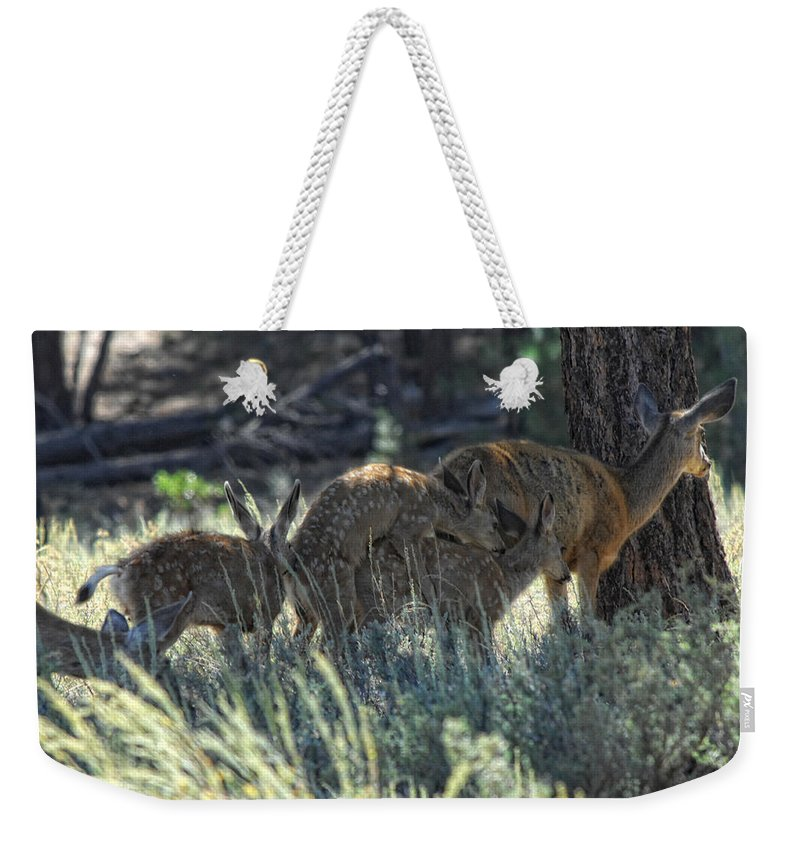 Deer Weekender Tote Bag featuring the photograph Family Values by Donna Blackhall