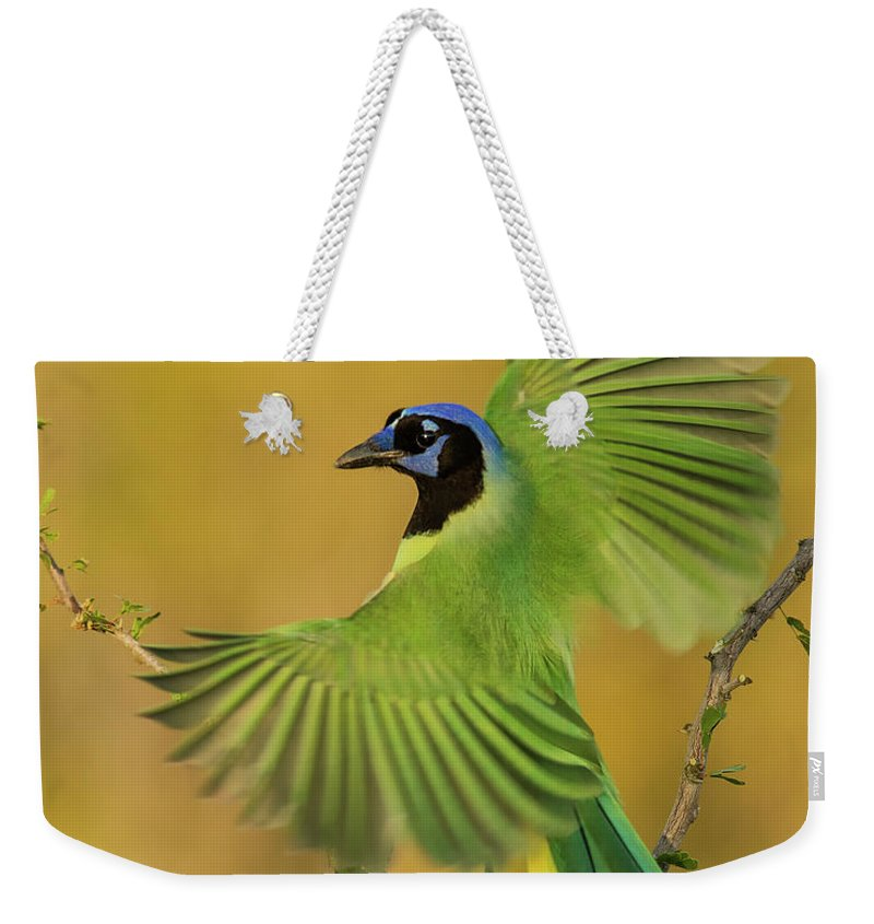 Green Jay Weekender Tote Bag featuring the photograph Fan Dancer by Christopher Ciccone