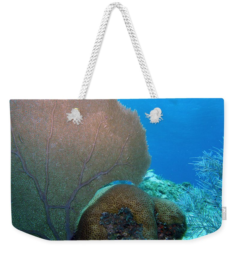 Nature Weekender Tote Bag featuring the photograph Fan Vs. Brain by Kimberly Mohlenhoff