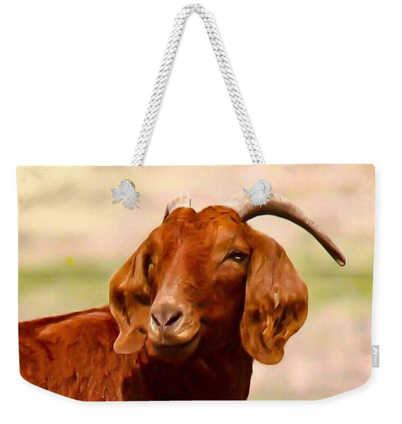 Goat Weekender Tote Bag featuring the photograph Fancy The Red Goat by Jeanie Mann