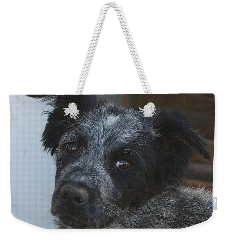 Canines Weekender Tote Bag featuring the photograph Farm Puppy by Jeff Swan