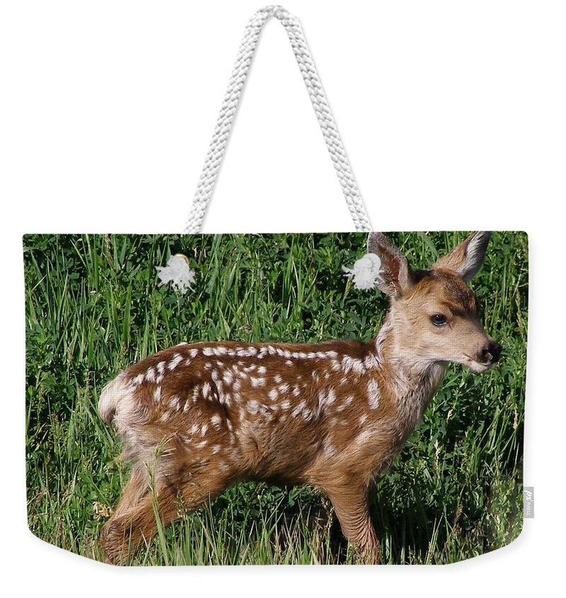 Wildlife Weekender Tote Bag featuring the photograph Fawn In The Open by DeeLon Merritt