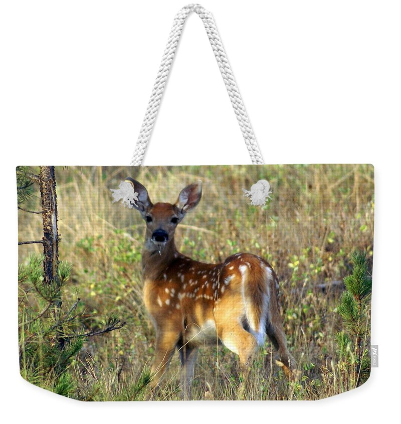 Deer Weekender Tote Bag featuring the photograph Fawn by Marty Koch